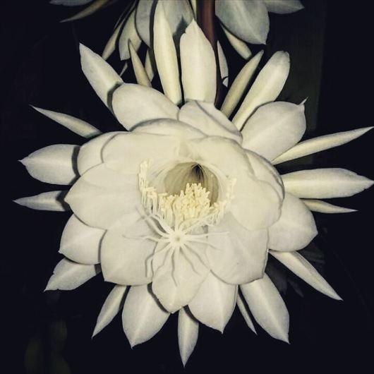 めったに見られない貴重で珍しい花(絶滅危惧種など)