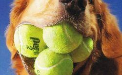 動物たちが持つ驚くべき世界記録(犬猫メイン)