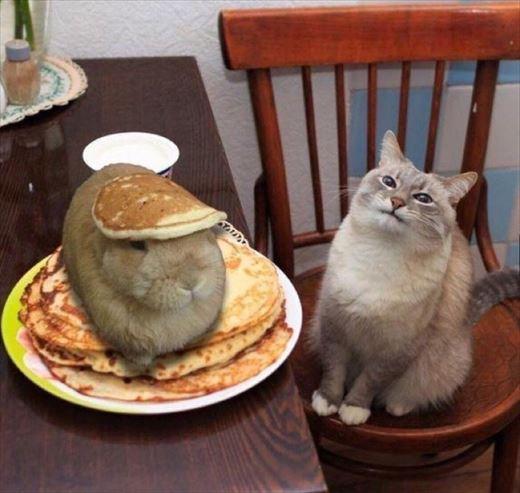 世界で話題のオモシロ可愛いネコ画像・50選
