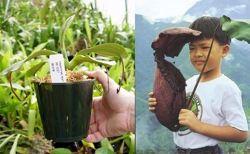 育てたくなる!魅力的な食虫植物たち8種類
