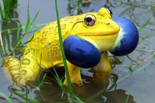 すさまじい色合い。予想外すぎた色彩の動物たち16種