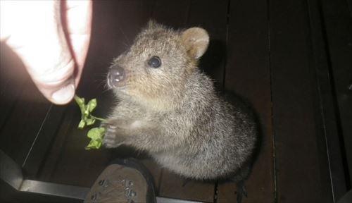 可愛い動物のみんなが知らないびっくり雑学