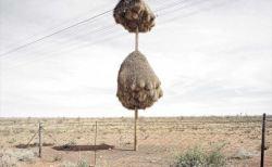 動物が生み出した驚くべき造形物(アート)