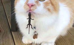 みんなを笑顔にした面白かわいい猫の写真