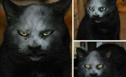 猫が悪魔であることの証拠写真
