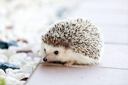 世界各国・州で禁止されている飼育できないペット