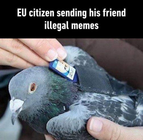 Pigeons send memes