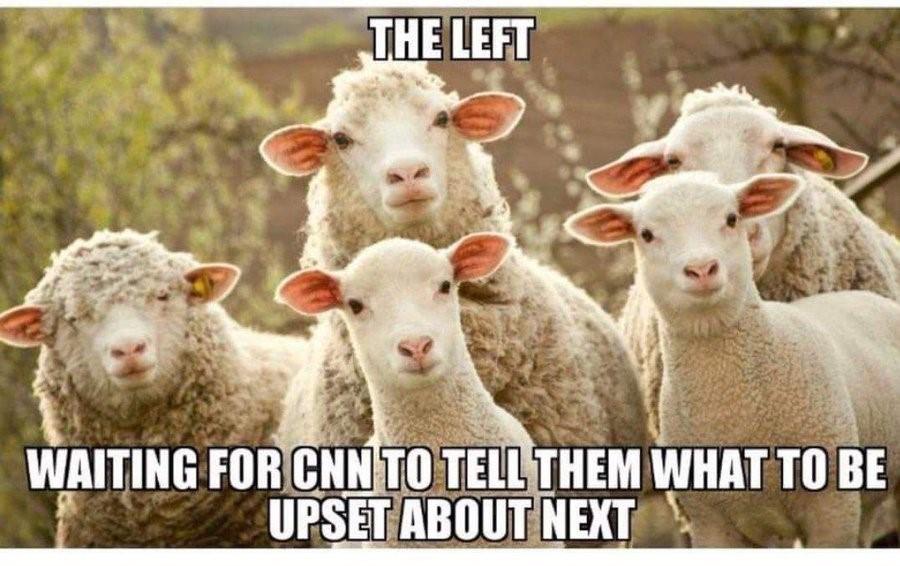 left sheep