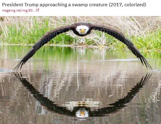 eagle on water.JPG