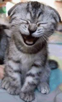 laughing cat 2