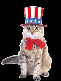 patriot_cat-removebg-preview (1)
