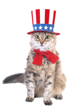 patriot_cat-removebg-preview (1)