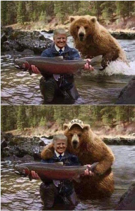 bear trump maga.JPG