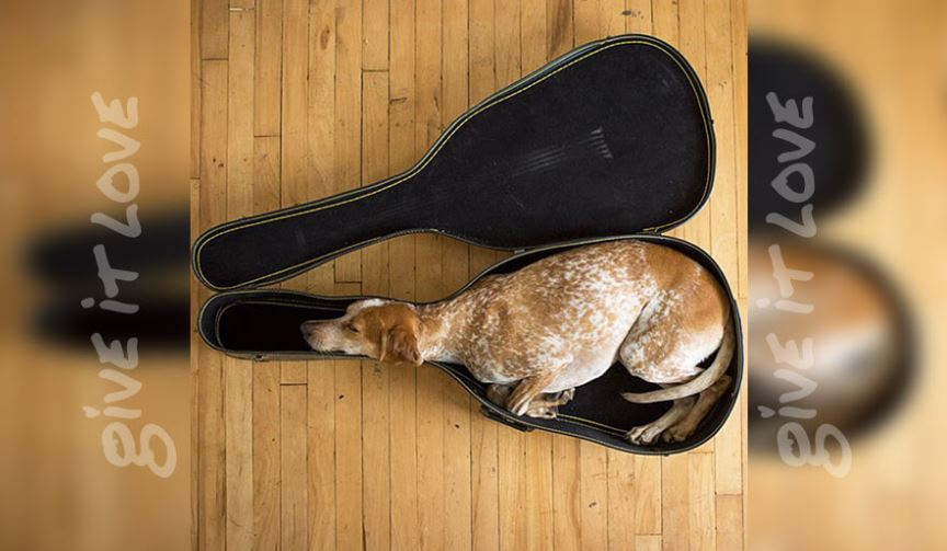 dog in guitar case.JPG