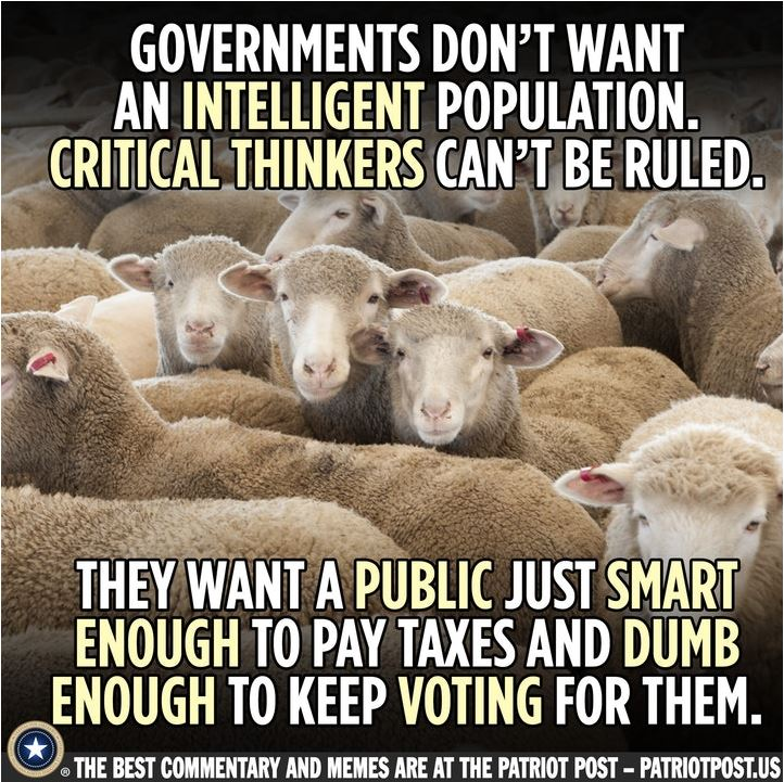 sheep voters.JPG