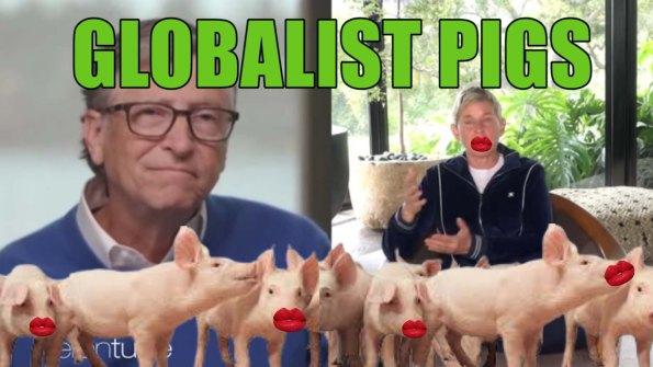 gates degeneres pigs
