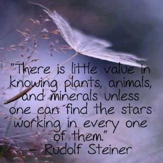 rudolf steiner stars plants