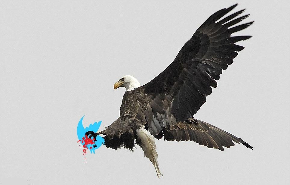 eagle twitter