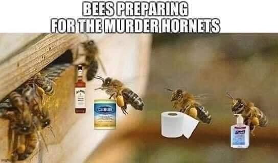 murdering hornets