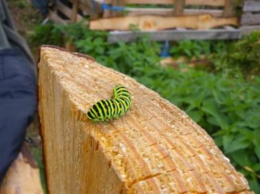 aime-jardinage03-jardins-pluriel-laurac