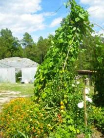 aime-jardinage21-jardins-pluriel-laurac