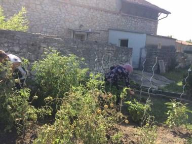 Jardinage Bourg-St-Andéol