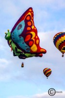 Interesting shaped hot air balloon: Beautiful Butterfly Photo