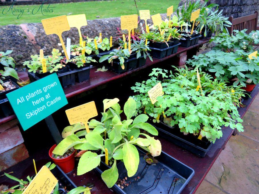 Various plants growing in pots.