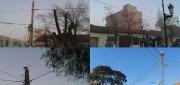Cette année, les cigognes sont revenues plus tôt que l'année passée,elles ont retrouvé le jardin public complètement dévasté