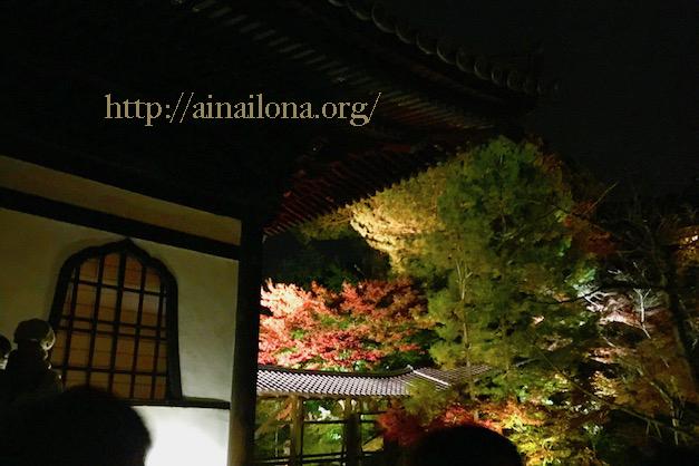 京都・高台寺・紅葉ライトアップ