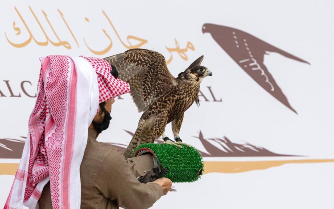 مكة.. أول صقر يتسابق في النسخة الثالثة لمهرجان الملك عبدالعزيز