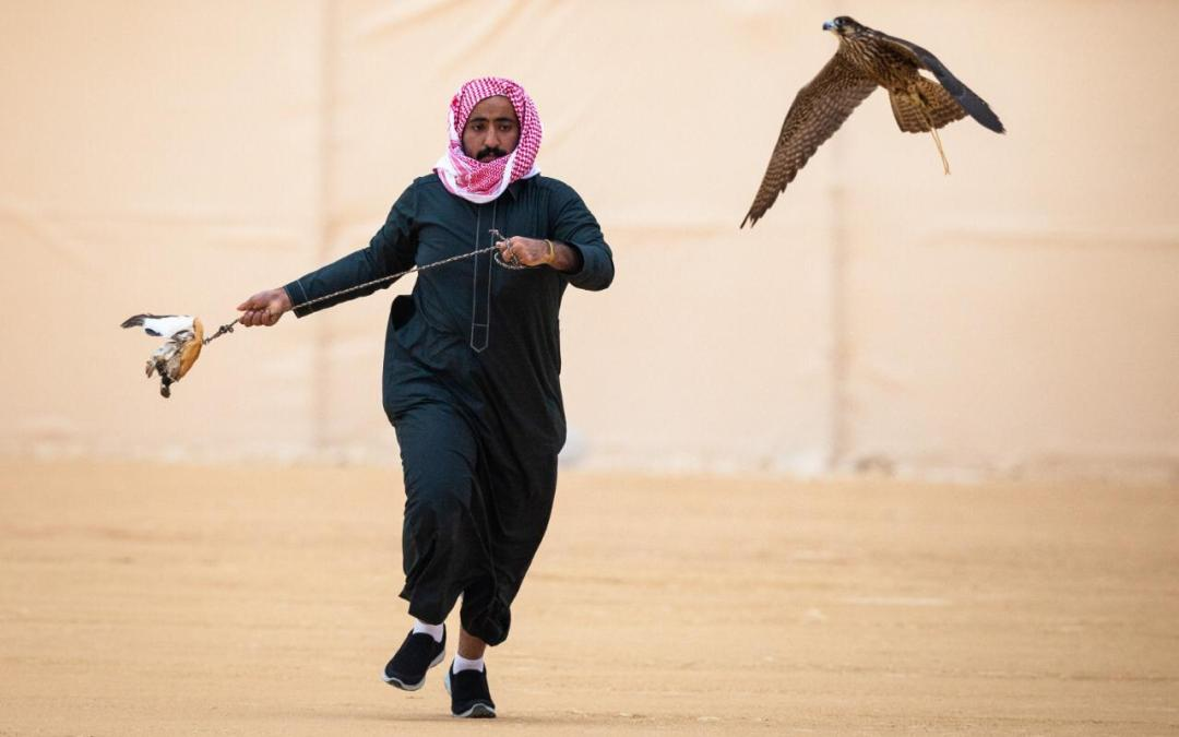 240 صقرا تتنافس بأشواط اليوم الثاني لمهرجان الملك عبدالعزيز للصقور