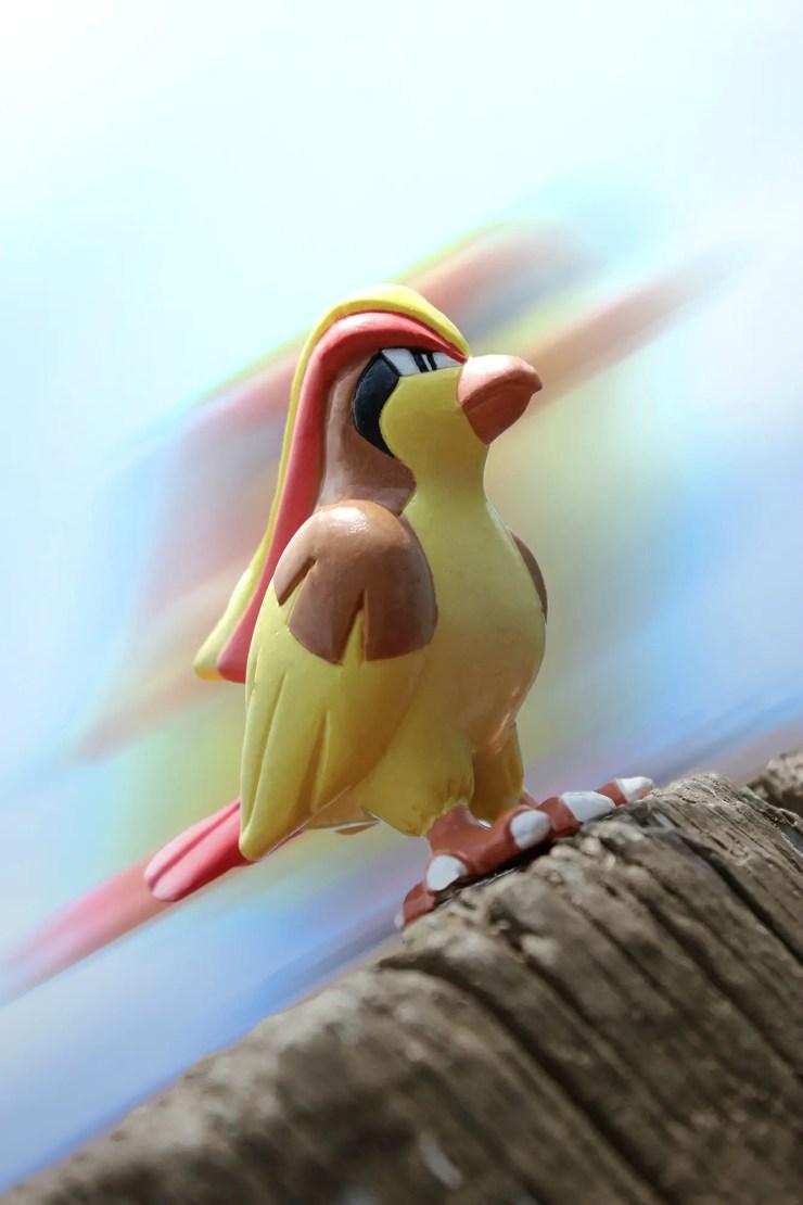 05 - Pidgeot