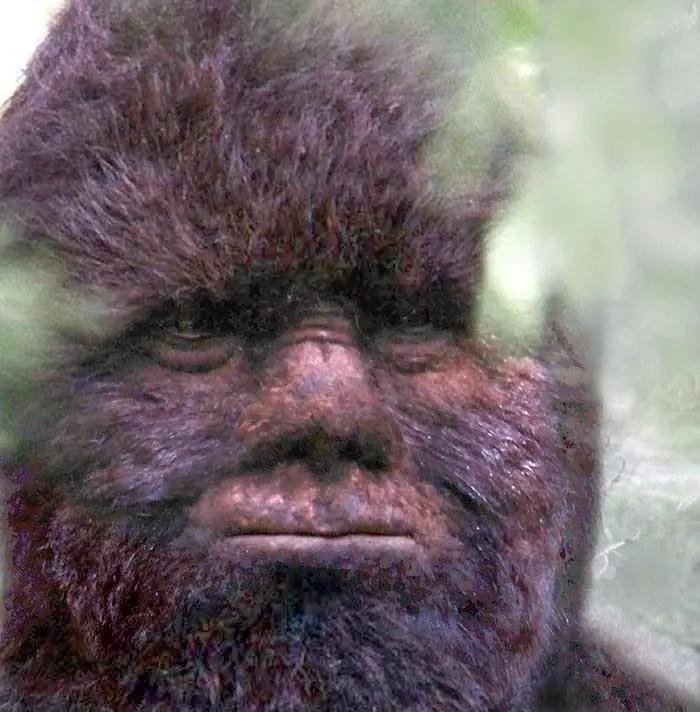 'Survivorman' Bigfoot Edition: Fact, fiction, or fan-fiction?