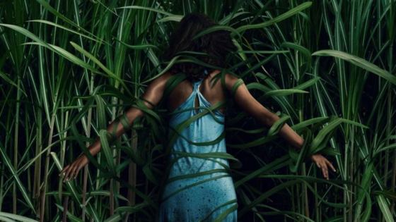 The director of 'In the Tall Grass' talks about what makes horror so special.