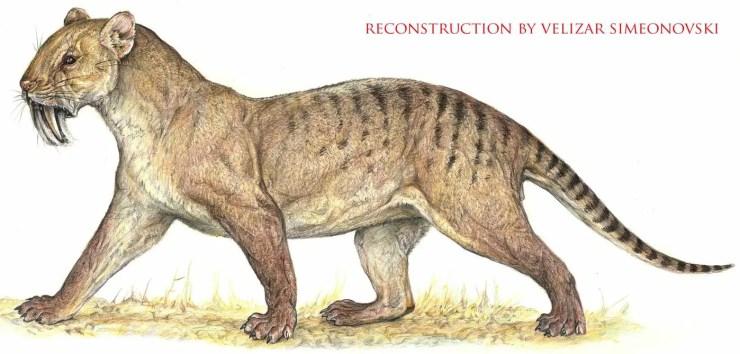 marsupial cat