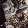 「かわいい猫代表取締役」ほたて。