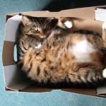 「なぜ猫は箱に入りたがるのか」最新の研究で意外すぎる3つの理由が解き明かされた!!