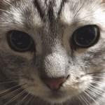 猫ブームに乗れてない猫と、僕が「か、勝てねぇ…」と心底感じている猫ベスト3匹。