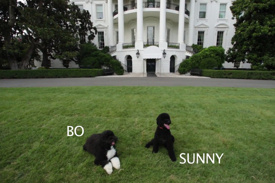 First Dog - Chain of Command - White House Needs a Dog