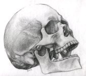 Possibly_Human_Skull_by_PixelTribe
