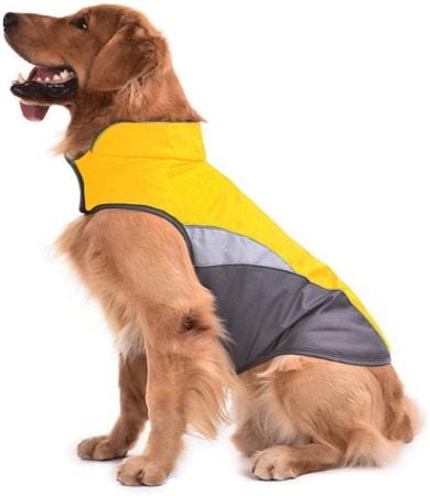 les 6 meilleurs manteau pour chien 2021