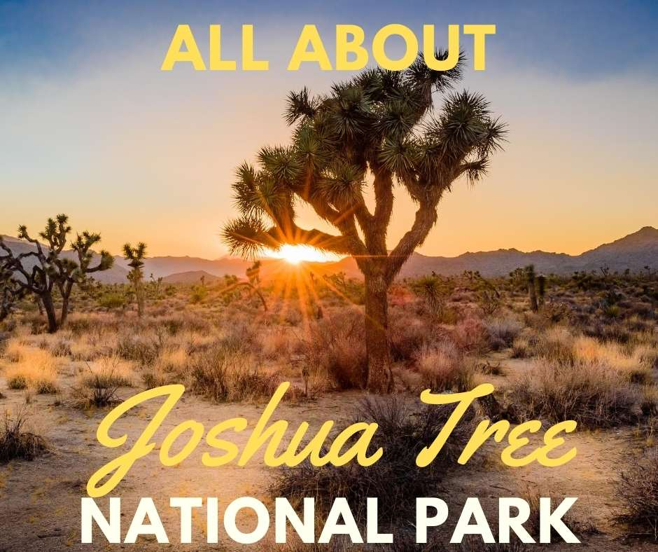 All About Joshua Tree National Park featured