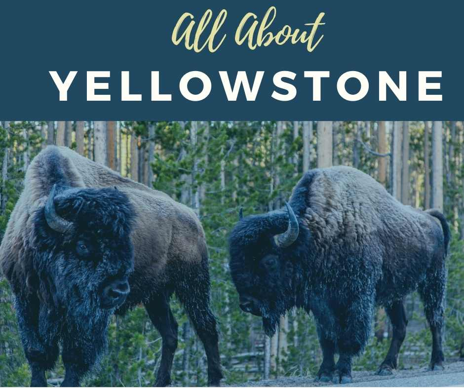 All about Yellowstone National Park Tips