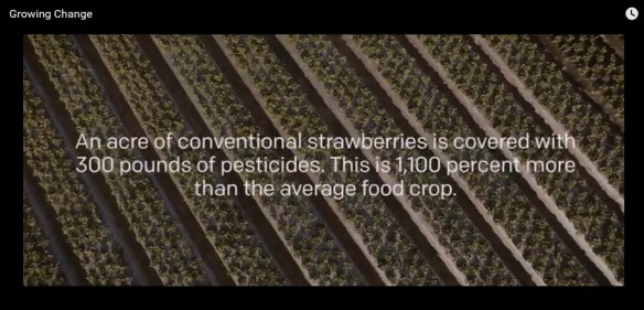 (click on image to view 4-minute video about a California farmer who went organic)