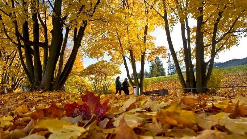 Fall Leaves Falling Wallpaper Por Que Amamos Buenos Aires No Outono Aires Buenos