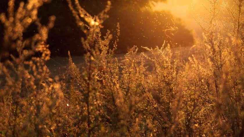 pollens et allergies traitements naturels de l'air intérieur