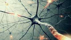 8 Hz brain waves
