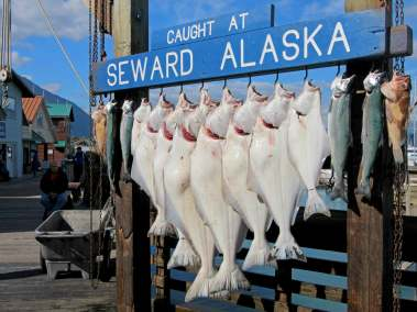 Fish Hanging at Seward Harbor
