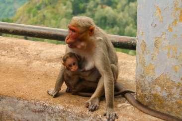 Monkey&Baby